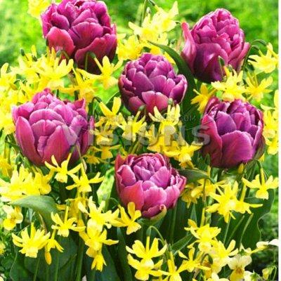 7 цветов! Тюльпаны штучно и наборами — НАБОРЫ МИКС ИЗ 5 тюльпанов(состав смотрим в табличках)