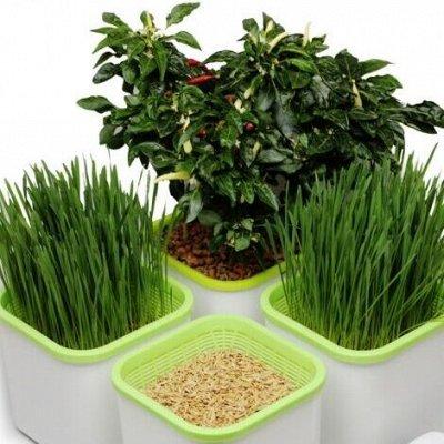 Здоровья клад. Проращиватели микрозелени. Наличие — Здоровья клад. Выращиваем микрозелоень