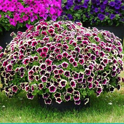 Украсим наш сад-большой выбор красоты — Вегетативка