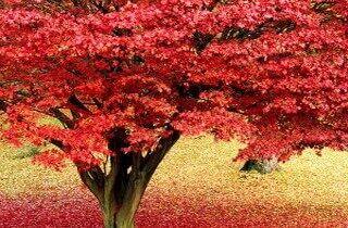 2000 видов семян для посадки! Подкормки, удобрения — Высокие деревья — саженцы
