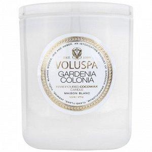 Колониальная гардения / Gardenia colonia