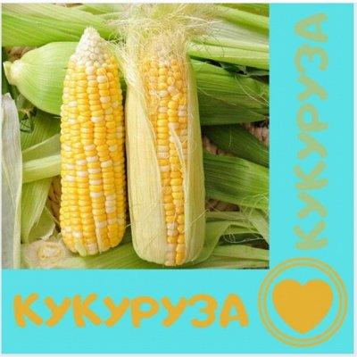 Семена. Большой выбор — Кукуруза