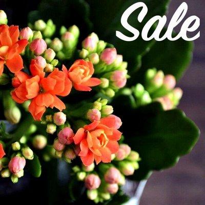 Хищный Sale! Огромный выбор комнатных растений!