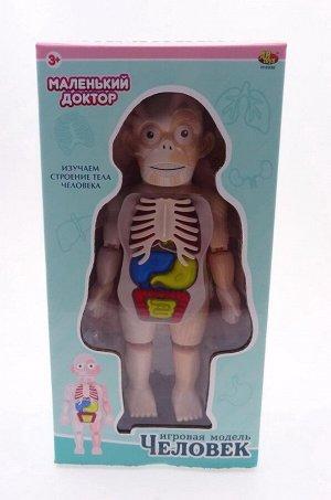 Игровой набор ABtoys Маленький доктор Изучаем строение человека4372