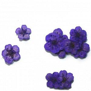 Сухоцветы для дизайна 02