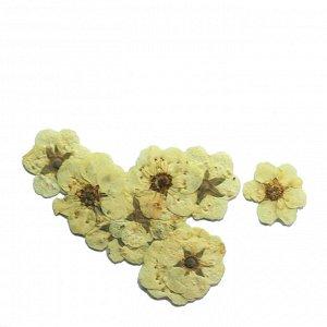 Сухоцветы для дизайна 04