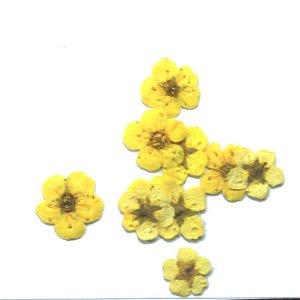 Сухоцветы для дизайна 05