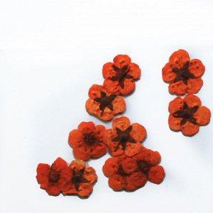 Сухоцветы для дизайна 10