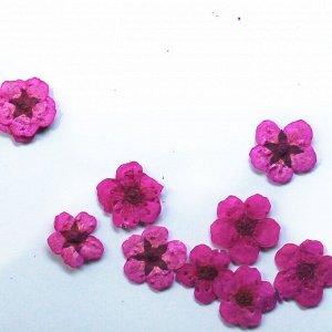 Сухоцветы для дизайна 11