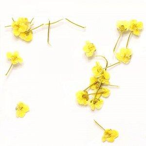 Сухоцветы для дизайна 14