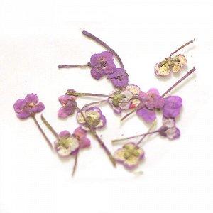 Сухоцветы для дизайна 26