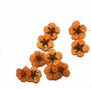 Сухоцветы для дизайна 29