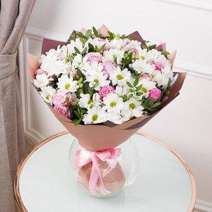 Набор из 5 любых хризантем укоренненные черенки