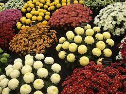 Набор из 5 штук Любой расцветки без выбора