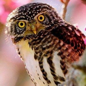 Набор ДТ Алмазная мозаика Любопытная сова с подр. 20*20см AC20056