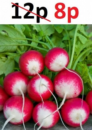 Семена Редис Розово-красный с белым кончиком