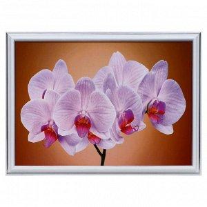 """Картина """"Нежная орхидея"""" 25х35(28х38) см"""
