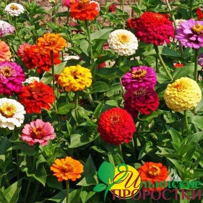 Микрозелень, миксы семян для проращивания! Полезно — Семена съедобных цветов