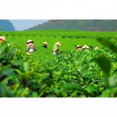 Сиропы и топпинги для кофе и чая — Вьетнамский зеленый чай