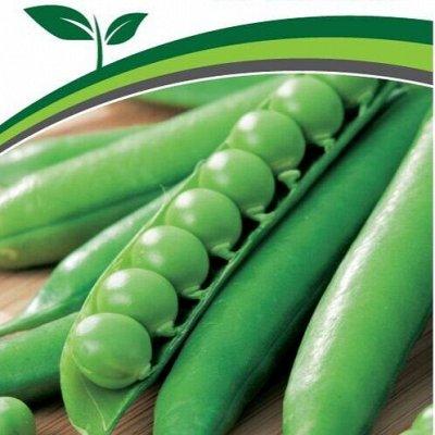 Семена Партнер и Семко. Летом — дешевле! Сроки годности 👍 — Горох, кукуруза, фасоль