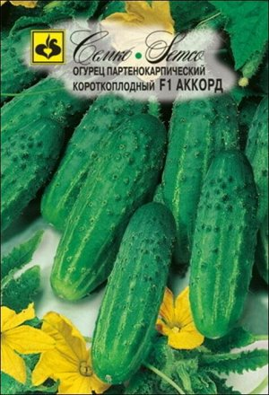 ТМ Семко Огурец партенокарпический Аккорд F1/ гибриды с длиной плодов 6-12 см