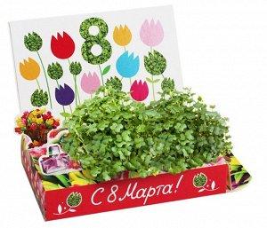 Подарочный набор 8 Марта №1 Тюльпаны