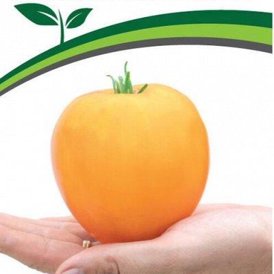 Семена Партнер и Семко. Летом — дешевле! Сроки годности 👍 — Томаты для защищенного грунта