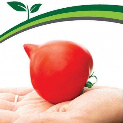Семена Партнер и Семко. Летом — дешевле! Сроки годности 👍 — Томаты для открытого грунта