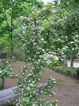 Саженцы жимолости, малины, смородины из Сибири — осень 2021 — Разные