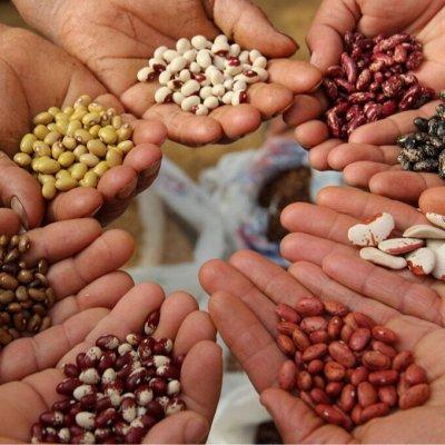 Все для сада и огорода (грунт, освещение, декор) — Семена