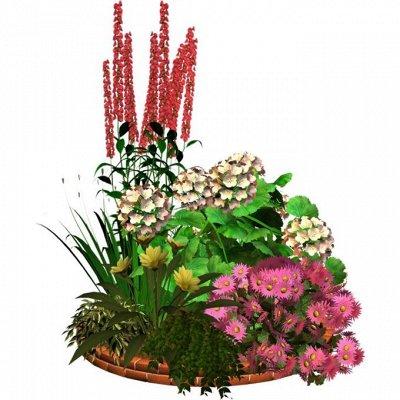 Сидераты БОЛЬШОЕ поступление — Цветы распродажа