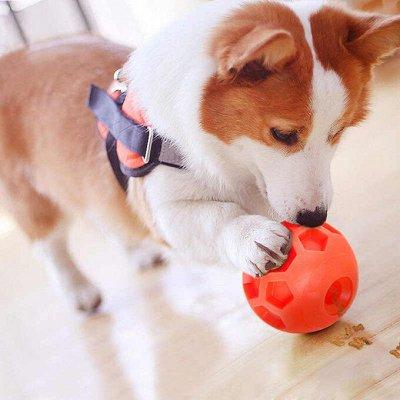 ✌ ОптоFFкa ️Товары ежедневного спроса ️ — Большое поступление! Для животных