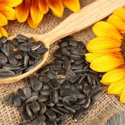 Все для сада и огорода (грунт, освещение, декор) — Семена1