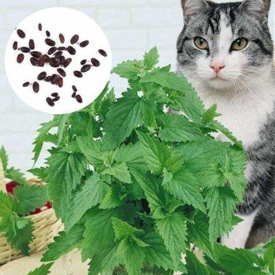 Дискаунтер Зоо Товаров — С Заботой и Ваших Питомцах — Кошачья мята