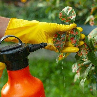 Большая распродажа для дома и сада — Средства от болезней растений