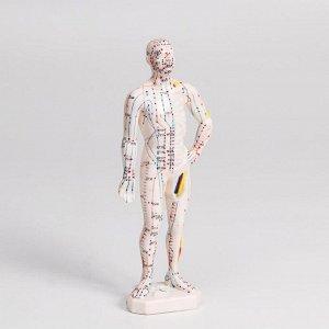 Модель для акупунктуры мужчина, 26 см