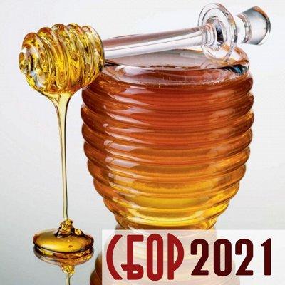 🐝 Приморский мёд. Продукты пчеловодства. Дикоросы — Мёд БАРХАТОВЫЙ 2021 (УКРЕПЛЯЕМ ИММУНИТЕТ)
