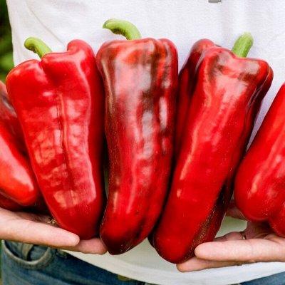 Шикарная коллекция томатов от Партнера — Какие перцы! От Партнера