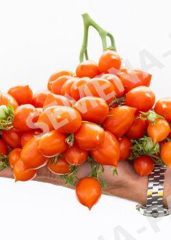 Семена Томат Поцелуй  10шт