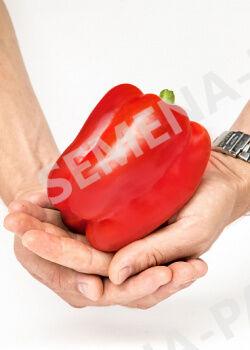 Семена Перец сладкий Халиф F1 ( 2-ной пак.)