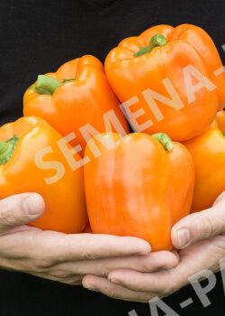 Семена Перец сладкий Аллар F1 5 шт