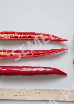 Семена Перец острый Флорентина   5 шт