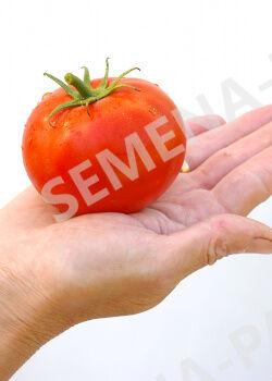 Семена Томат Андромеда F1 0,05 гр.