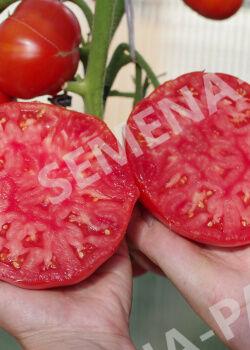 Семена Томат Бабушкино 10 шт.