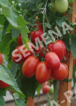 Семена Томат Везувий F1 0,05 гр.