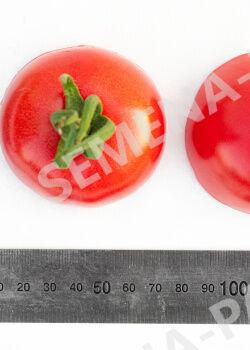 Семена Томат Розовый Шар  (10ШТ)