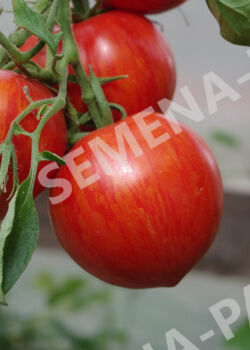 Семена Томат Сердцевидный полосатый (10 шт)