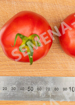 Семена Томат Синдбад F1 ^(0,05Г)