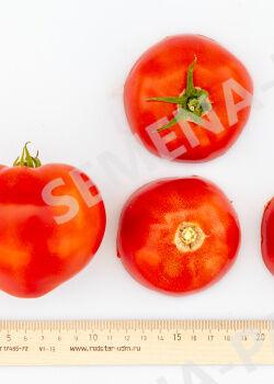 Семена Томат Тореадор F1 ^ (10ШТ)