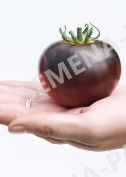 Семена Томат Черная Богиня 10шт